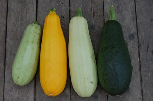 zucchini-1637435_960_720