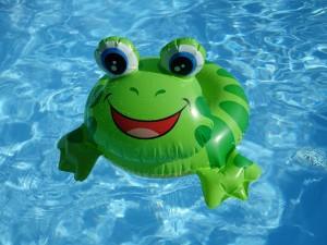 frog-1558009_1920