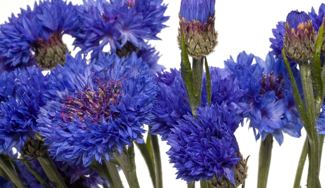 flowers-1457624_1920