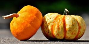 pumpkins-2825186_1920