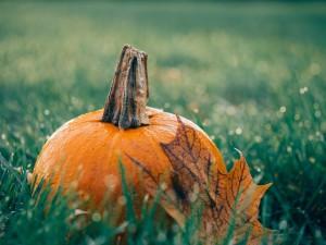 pumpkin-1030817_960_720